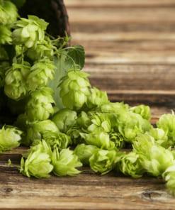 Slovenian Hops